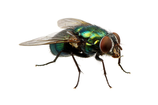 repel flies at the outdoor